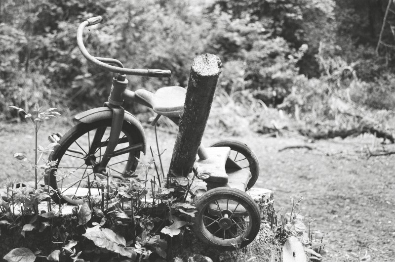 Oregon Tricycle: Old timey trike growing in the wild.